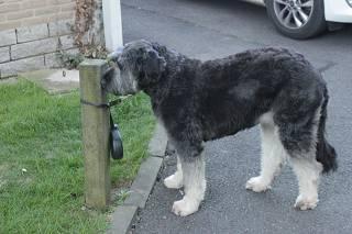 Hond activeert elektrisch fornuis en zorgt zo bijna voor brand
