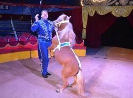 Wedstrijd: Met B.R.U. gratis naar het circus