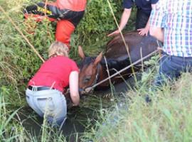 Wielsbeke: Brandweer redt paard uit diepe gracht