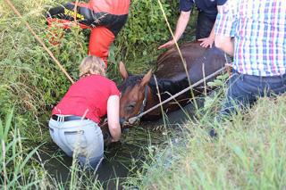Brandweer redt paard uit diepe gracht in Wielsbeke