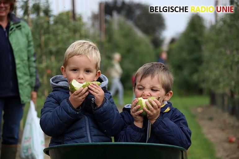 Fruitpluk in Sint-Eloois-Vijve