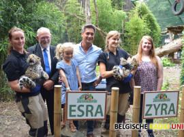 Namen zeldzame Amoerluipaardwelpen in Bellewaerde bekend