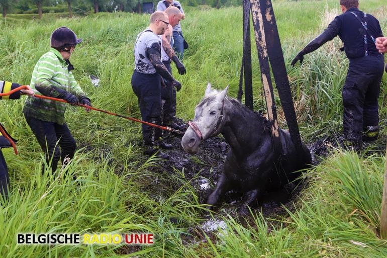 Hulpdiensten redden paard uit gracht