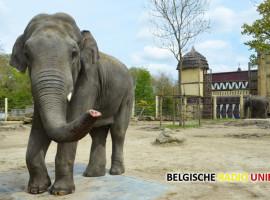 Olifant Tunga onverwachts gestorven in Bellewaerdepark