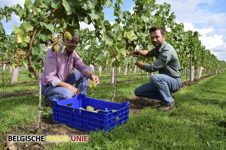 Open Wijngaardfeesten in de Westhoek