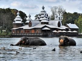 Pairi Daiza : beste dierentuin van Europa!