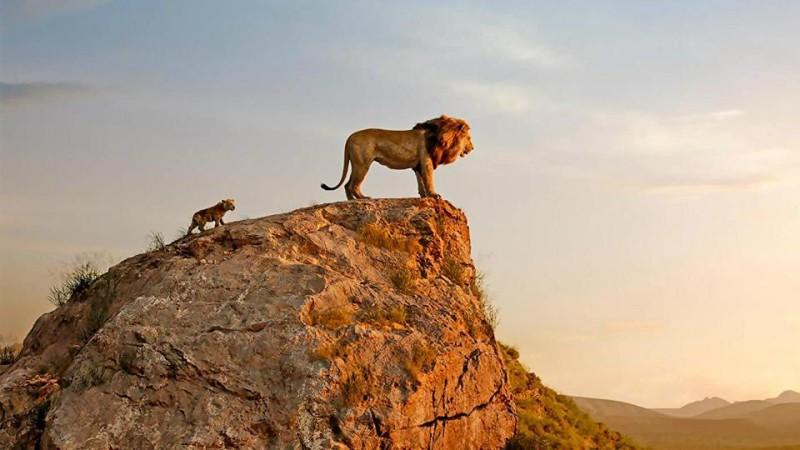 Dé film van de zomer is er : The Lion King!