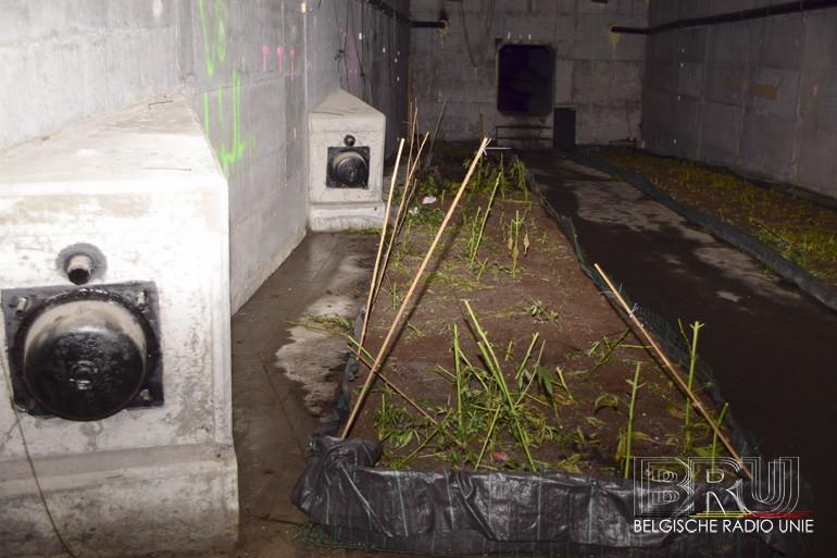 Cannabisplantage in koker Leiebrug N382 Wielsbeke was professioneel aangelegd