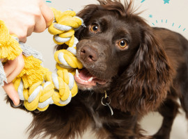 Tips om je huisdier fit te houden