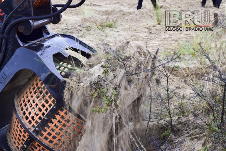 Werken in de Westhoek moeten oudste duinenreservaat van het land redden