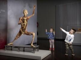 Fascinerende expo 'Real Bodies' komt naar Sportpaleis