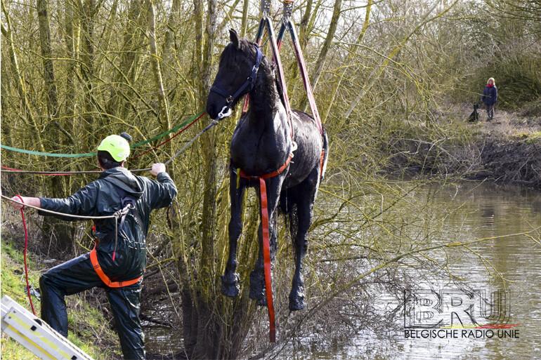 Paard te water in Diksmuide